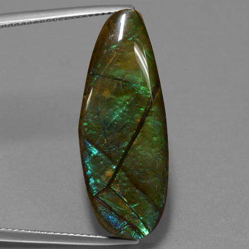 14.4ct Fancy Cabochon Multicolor Ammolite Gem (ID: 452686)