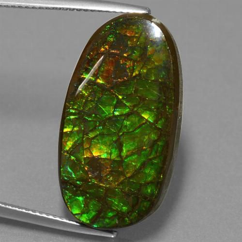 21.5ct Fancy Cabochon Multicolor Ammolite Gem (ID: 452689)