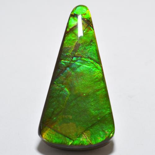 Multicolor Ammolite Gem - 15.8ct Trillion Cabochon (ID: 452731)