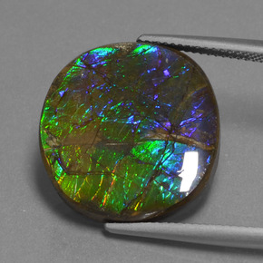 Multicolor Ammolite Gem - 16.7ct Oval Cabochon (ID: 452732)