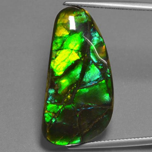 Multicolor Ammolite Gem - 23.5ct Fancy Cabochon (ID: 452733)