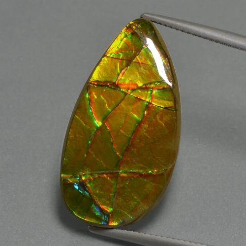 19.4ct Fancy Cabochon Multicolor Ammolite Gem (ID: 452734)