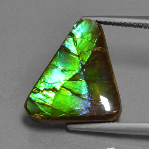 Multicolor Ammolite Gem - 11.3ct Trillion Cabochon (ID: 452737)