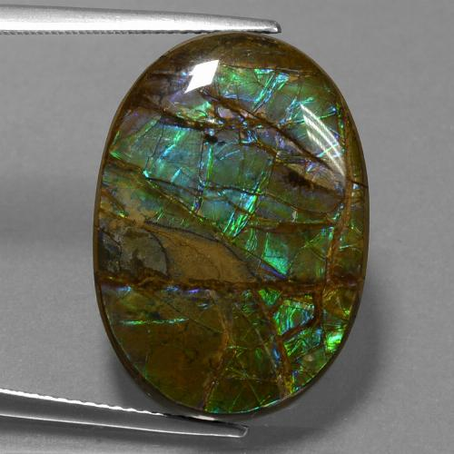 Multicolor Ammolite Gem - 18.6ct Oval Cabochon (ID: 452769)