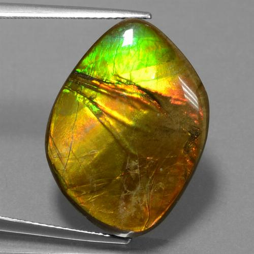 16.3ct Fancy Cabochon Multicolor Ammolite Gem (ID: 452772)