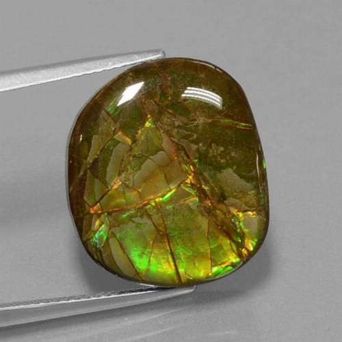 13.1ct Fancy Cabochon Multicolor Ammolite Gem (ID: 452852)