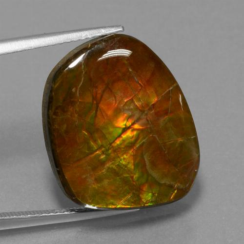 Multicolor Ammolite Gem - 16.1ct Fancy Cabochon (ID: 452854)