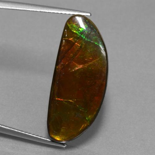 14.6ct Fancy Cabochon Multicolor Ammolite Gem (ID: 452908)