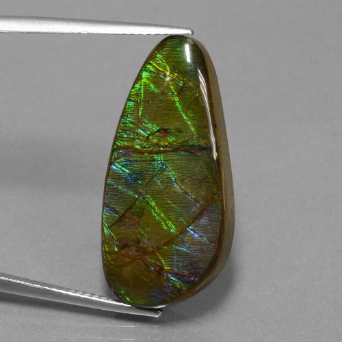 16.2ct Fancy Cabochon Multicolor Ammolite Gem (ID: 452909)