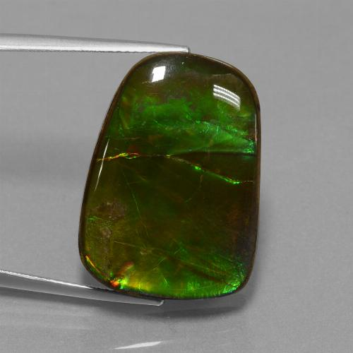 Multicolor Ammolite Gem - 23.2ct Fancy Cabochon (ID: 452910)