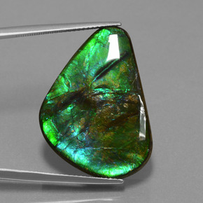 Multicolor Ammolite Gem - 24.6ct Trillion Cabochon (ID: 452911)