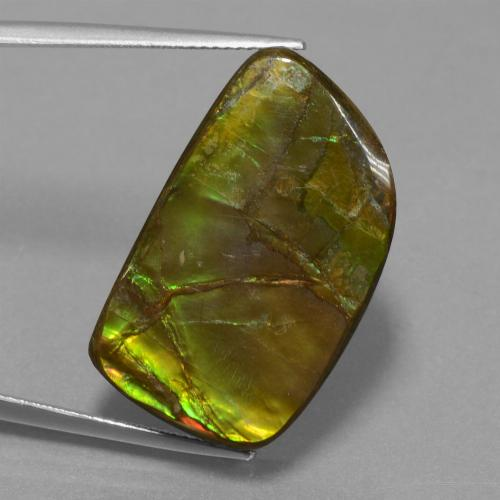 Multicolor Ammolite Gem - 21.1ct Fancy Cabochon (ID: 452913)