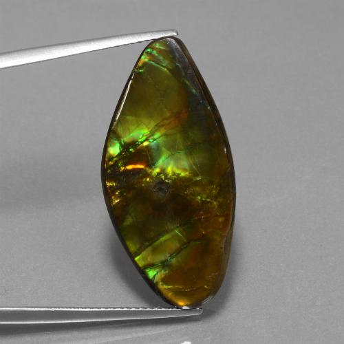 19ct Fancy Cabochon Multicolor Ammolite Gem (ID: 452915)