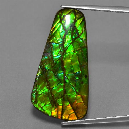 Multicolor Ammolite Gem - 17.1ct Fancy Cabochon (ID: 452983)