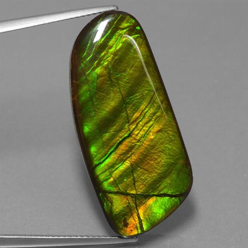 25.9ct Fancy Cabochon Multicolor Ammolite Gem (ID: 453560)