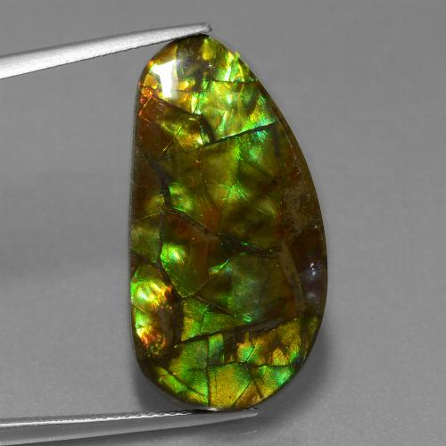 Multicolor Ammolite Gem - 19ct Fancy Cabochon (ID: 453561)