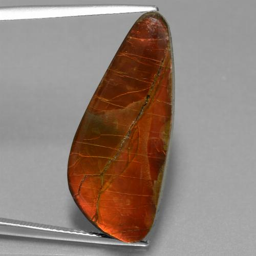 13.9ct Fancy Cabochon Multicolor Ammolite Gem (ID: 453562)