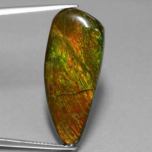 18.1ct Fancy Cabochon Multicolor Ammolite Gem (ID: 453564)