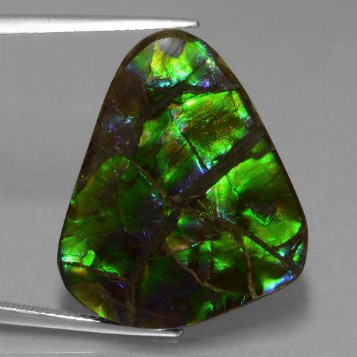 Multicolor Ammolite Gem - 21.1ct Trillion Cabochon (ID: 453565)