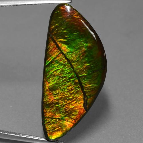 Multicolor Ammolite Gem - 19.3ct Shark Fin Cabochon (ID: 453569)