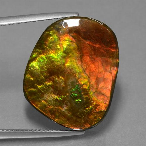 Multicolor Ammolite Gem - 20.7ct Fancy Cabochon (ID: 453570)