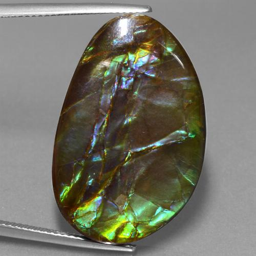 27.7ct Fancy Cabochon Multicolor Ammolite Gem (ID: 453598)