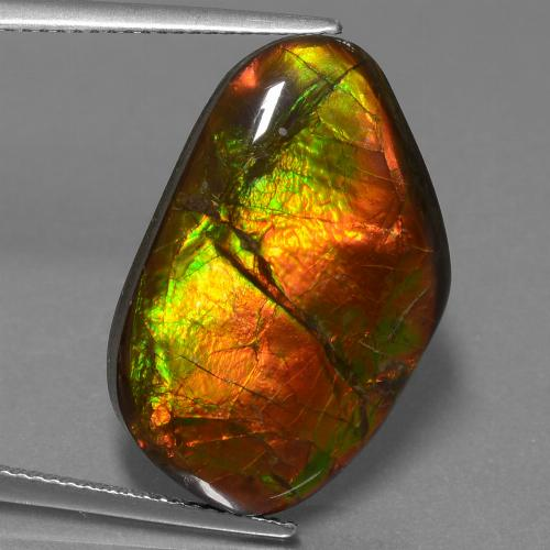 Multicolor Ammolite Gem - 18.2ct Fancy Cabochon (ID: 453602)