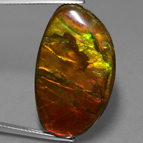 25ct Fancy Cabochon Multicolor Ammolite Gem (ID: 453604)