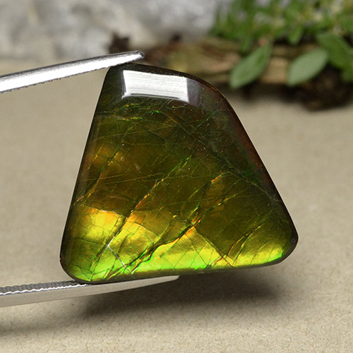 Multicolor Ammolite Gem - 18.6ct Fancy Cabochon (ID: 494089)