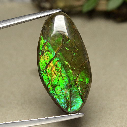 12.6ct Fancy Cabochon Multicolor Ammolite Gem (ID: 494090)