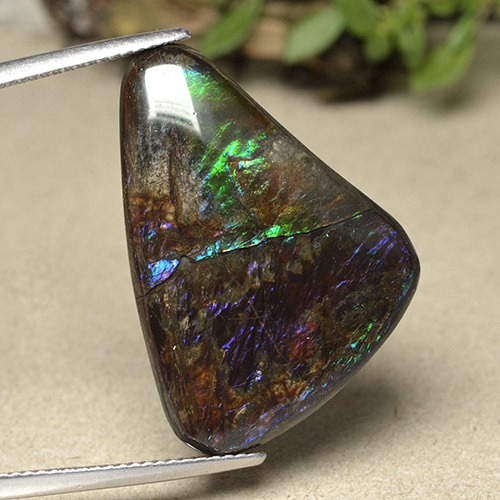 Multicolor Ammolite Gem - 21.9ct Shark Fin Cabochon (ID: 494091)