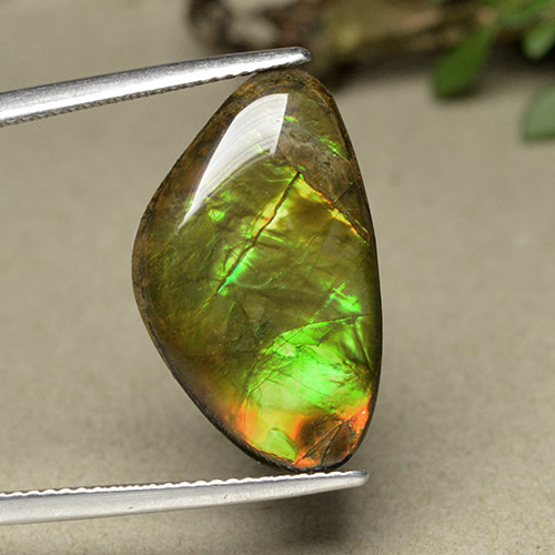 Multicolor Ammolite Gem - 11.4ct Shark Fin Cabochon (ID: 494093)