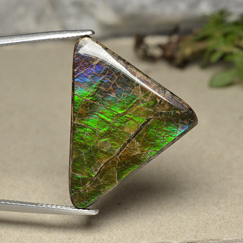 Multicolor Ammolite Gem - 20.6ct Trillion Cabochon (ID: 494094)