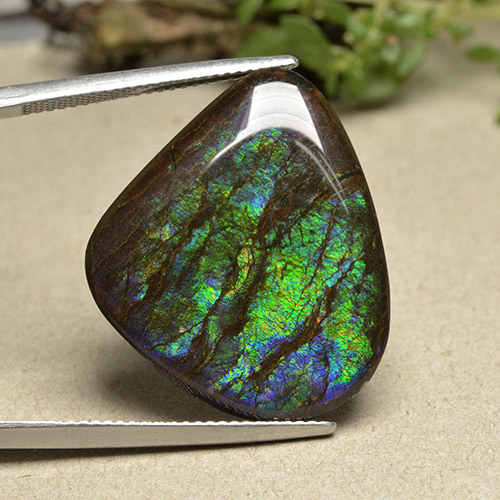 21.1ct Fancy Cabochon Multicolor Ammolite Gem (ID: 494097)