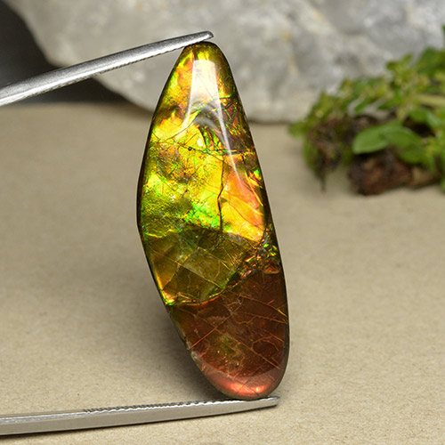 Multicolor Ammolite Gem - 22.7ct Fancy Cabochon (ID: 494098)