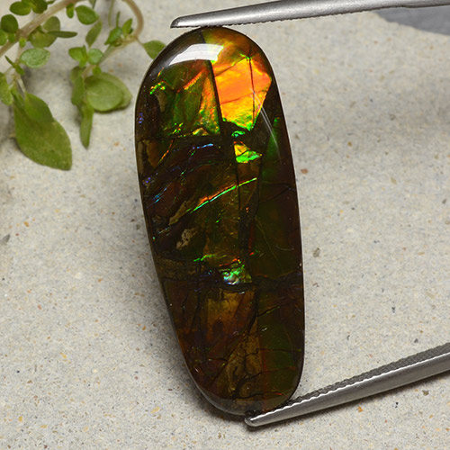 19.1ct Fancy Cabochon Multicolor Ammolite Gem (ID: 494101)