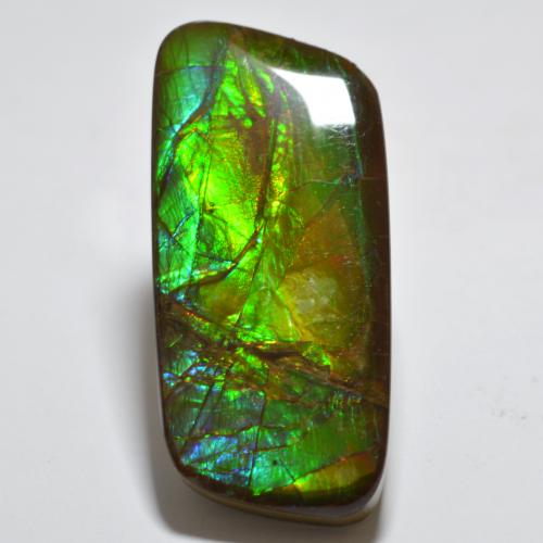 23.4ct Fancy Cabochon Multicolor Ammolite Gem (ID: 494349)