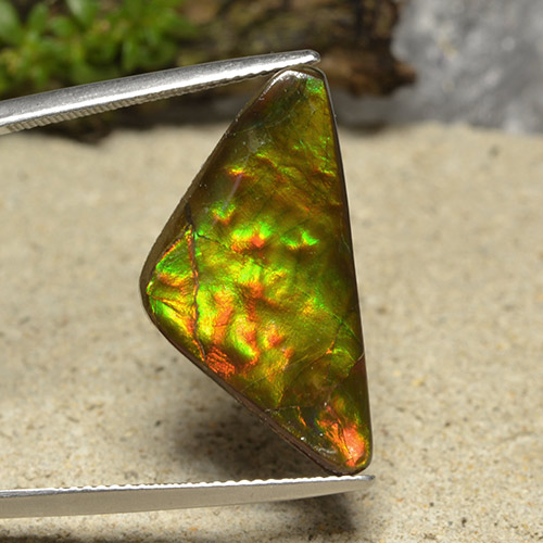 Multicolor Ammolite Gem - 12.2ct Trillion Cabochon (ID: 494358)