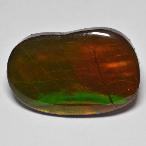 22.6ct Fancy Cabochon Multicolor Ammolite Gem (ID: 494362)