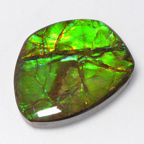 Multicolor Ammolite Gem - 15.5ct Fancy Cabochon (ID: 520795)