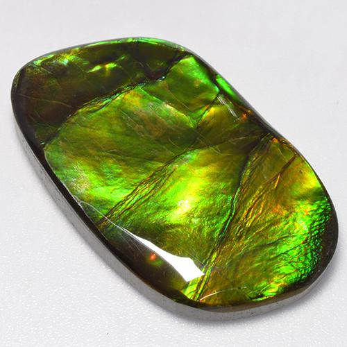 24ct Fancy Cabochon Multicolor Ammolite Gem (ID: 520804)