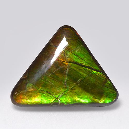 Multicolor Ammolite Gem - 14.5ct Trillion Cabochon (ID: 521311)