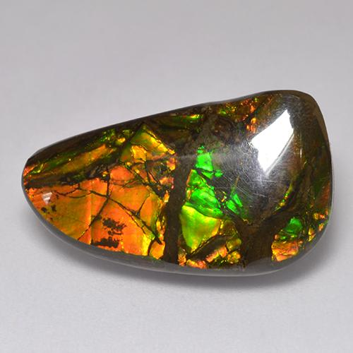 13.5ct Fancy Cabochon Multicolor Ammolite Gem (ID: 521312)