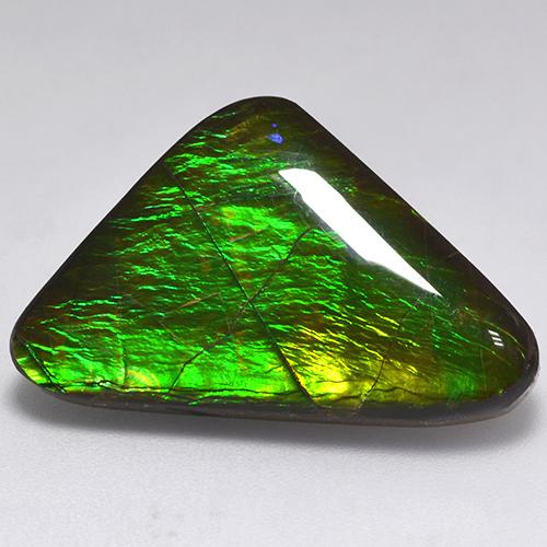 Multicolor Ammolite Gem - 16.3ct Trillion Cabochon (ID: 521581)