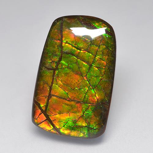 Multicolor Ammolite Gem - 15.2ct Fancy Cabochon (ID: 522367)