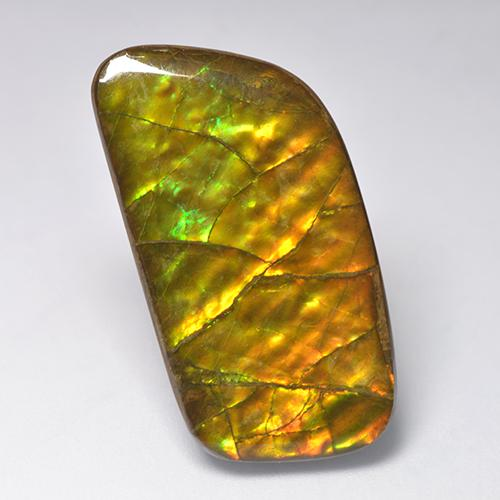 Multicolor Ammolite Gem - 23.2ct Fancy Cabochon (ID: 522373)