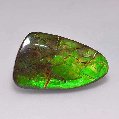 19.7ct Fancy Cabochon Multicolor Ammolite Gem (ID: 523388)