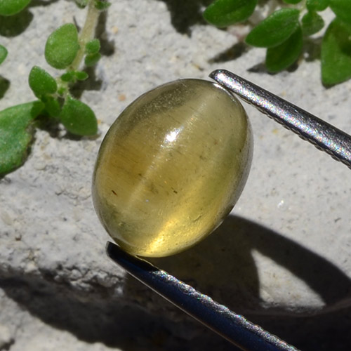 Greenish Golden Cat's Eye Apatite Gem - 2.4ct Oval Cabochon (ID: 483926)