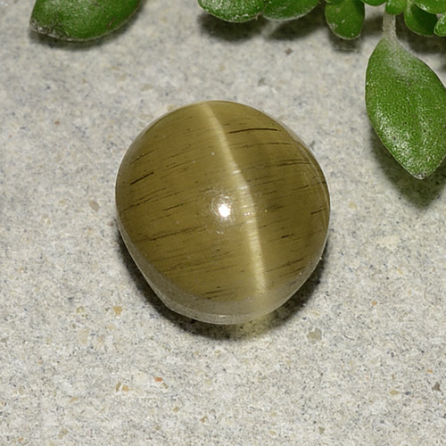 Greenish Golden Cat's Eye Apatite Gem - 2.7ct Oval Cabochon (ID: 485998)