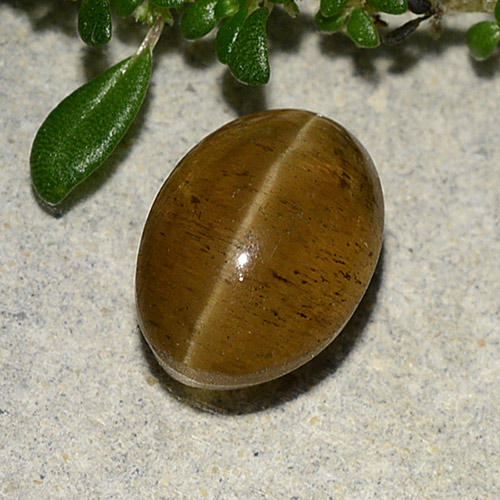 Greenish Golden Cat's Eye Apatite Gem - 3.1ct Oval Cabochon (ID: 486010)